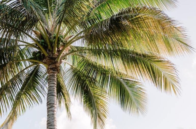 Palm Tree in the Wind