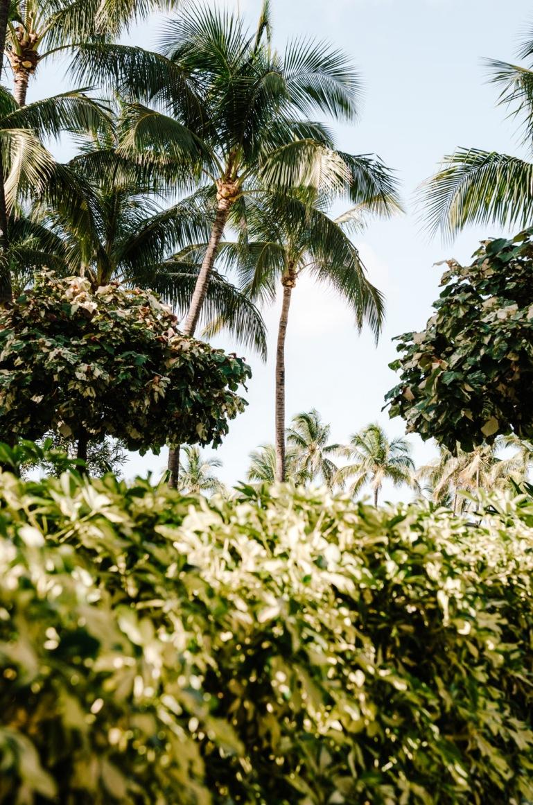 Naturally Exotic Tropical Vegetation