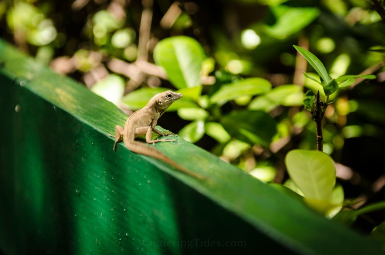 Small Lizard on Railing