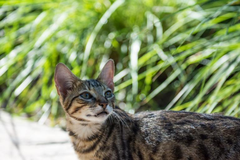 Cat in the Tropics